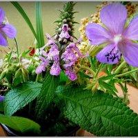 Цветы полевые! :: Владимир Шошин