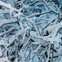 Зимушка зима :: Дарья Вега