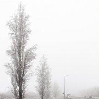Туман похож на обман... :: Надежда Ивашкина