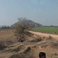 На дорогах Индии :: Алексей Хвастунов
