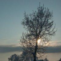 закат зимой :: Михаил