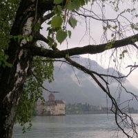 туманный день в Монтрё :: liudmila drake