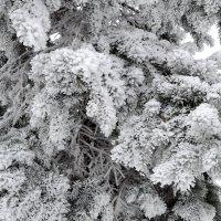 Снежком мороз укутывал - смотри, не замерзай! :: Александр