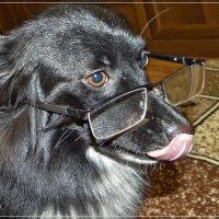 Пёс в очках :: Андрей Дворников