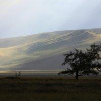 Алтай :: Вадим Заблоцкий
