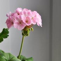 Весна на подоконнике :: Елена Михеева