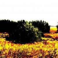 лето в красках :: Ксения ...