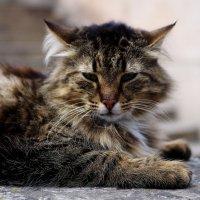 Модельный кот :: Ivan teamen