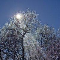 Серебро обледенелых ветвей :: Владимир ЯЩУК