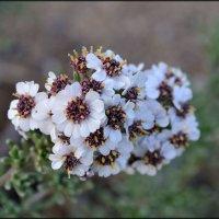 цветы ботанического сада Испании :: Svetlana Plasentsiia