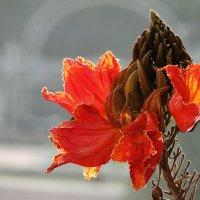 Оранжевая красота :: Оксана Шрикантх