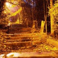 Ночь в парке :: Valeria Ashhab