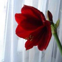 Цветок :: Christina Batovskaya
