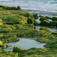Море и водоросли :: Lmark