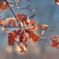 Глубокая осень :: Дмитрий Коваленко