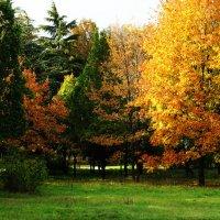 Осенняя полянка :: Юрий Яловенко