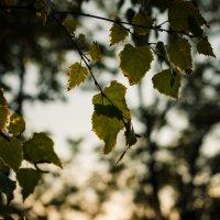 Осенний вечер :: Ivan teamen