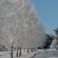 Зима 2 :: Олег Ганжа
