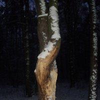 Обнажённое дерево. :: Ольга Кривых