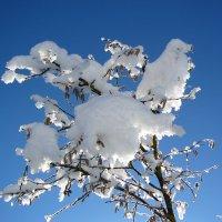 Зима :: Serega Денисенко