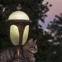 Кот одесский, задумчивый :: Peiper ///
