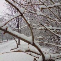Утренний снег. :: Валентина .