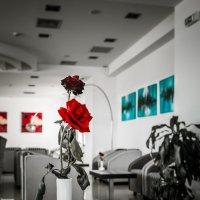 Черно-бело-красно-голубой натюрморт :: Александр Хвостов