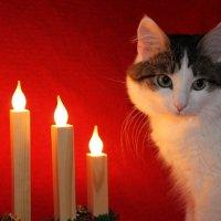 При свечах :: Елена Михайлова