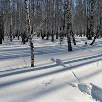 Следы и тени на снегу :: Геннадий Ячменев