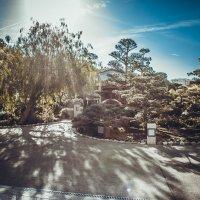 Китайский сад в Монако :: Надежда Елькина
