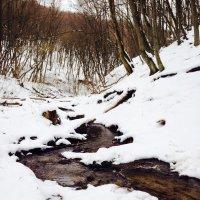 Лесная речка :: Yarik Minakin