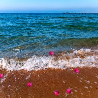 Розы на берегу... :: Елена Васильева