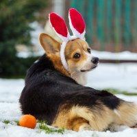 Новогодний заяц :: Анастасия Ласская