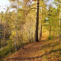 Осенний лес. :: Vladimir