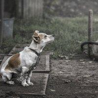 Вся жизнь на цепи :: Анна Хрипачева
