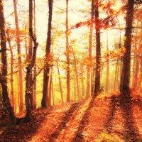 Крымская осень :: Солнечная Лисичка =Дашка Скугарева