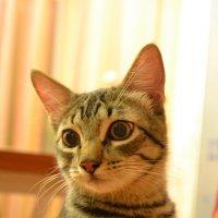 И у котов бывают мысли :: Karina Mart