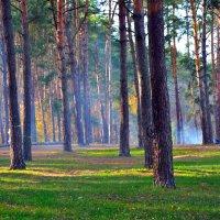 Лес :: dimakoshelev Кошелев