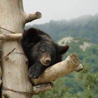 Не будите во мне зверя... :: Александр Смирнов