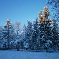 зимнее утро :: оксана ка