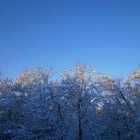 зимний свет... :: оксана ка
