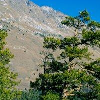 Бесснежная сторона горы... :: ФотоЛюбка *