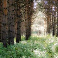 Сказочный лес :: Yana Fizazi