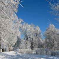 зима-красавица :: Лариса *