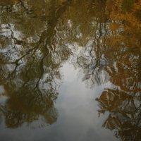 Глаза озера - зеркало души леса :: Veronika Chernyshova