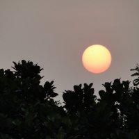 Красное солнце заката :: Оксана Шрикантх