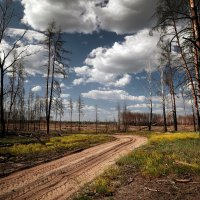 мёртвый лес :: Василий Алехин
