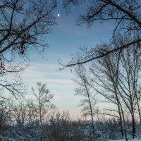 В лунном свете :: Александр Никишков