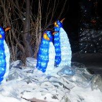 Королевские пингвины :: юрий Амосов