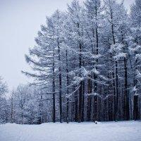 Зима :: Екатерина Целищева